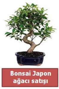 Japon ağacı bonsai satışı  Erzincan online çiçekçi , çiçek siparişi