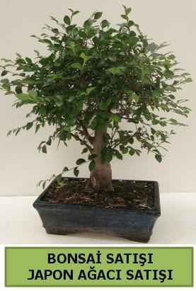 Minyatür bonsai japon ağacı satışı  Erzincan 14 şubat sevgililer günü çiçek
