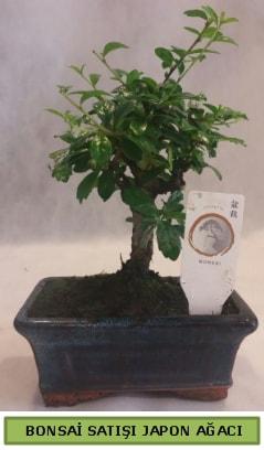 Minyatür bonsai ağacı satışı  Erzincan hediye sevgilime hediye çiçek