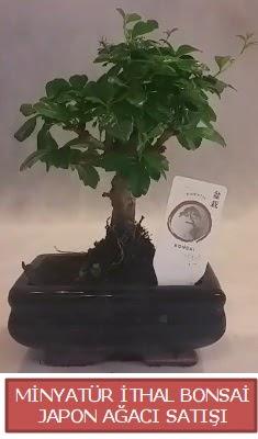 Küçük görsel bonsai japon ağacı bitkisi  Erzincan çiçek mağazası , çiçekçi adresleri