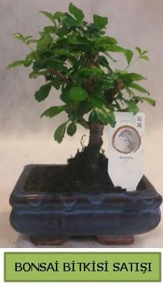 Bonsai ithal görsel minyatür japon ağacı  Erzincan kaliteli taze ve ucuz çiçekler