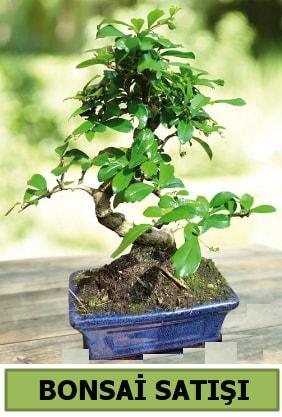 Çam bonsai japon ağacı satışı  Erzincan çiçek servisi , çiçekçi adresleri