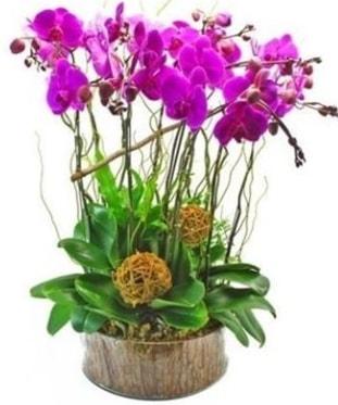 Ahşap kütükte lila mor orkide 8 li  Erzincan çiçek yolla , çiçek gönder , çiçekçi
