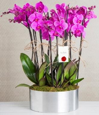 11 dallı mor orkide metal vazoda  Erzincan 14 şubat sevgililer günü çiçek