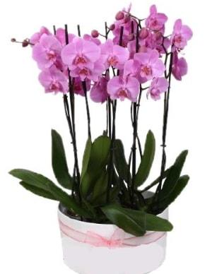 Beyaz seramik içerisinde 7 dallı mor orkide  Erzincan çiçek online çiçek siparişi