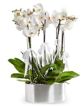 Beş dallı metal saksıda beyaz orkide  Erzincan anneler günü çiçek yolla