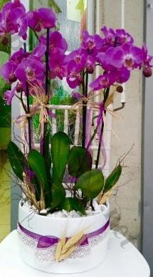 Seramik vazoda 4 dallı mor lila orkide  Erzincan çiçek gönderme