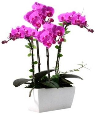 Seramik vazo içerisinde 4 dallı mor orkide  Erzincan çiçek servisi , çiçekçi adresleri