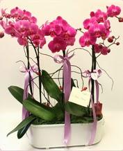 Beyaz seramik içerisinde 4 dallı orkide  Erzincan kaliteli taze ve ucuz çiçekler
