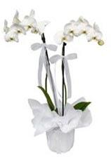 2 dallı beyaz orkide  Erzincan çiçek siparişi vermek