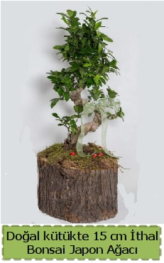 Doğal kütükte İthal bonsai japon ağacı  Erzincan hediye sevgilime hediye çiçek