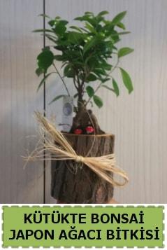 Kütük içerisinde doğal bonsai ağacı  Erzincan çiçek online çiçek siparişi