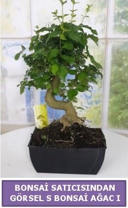 S dal eğriliği bonsai japon ağacı  Erzincan çiçek servisi , çiçekçi adresleri