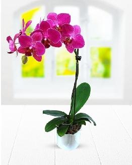 Tek dallı mor orkide  Erzincan çiçek servisi , çiçekçi adresleri