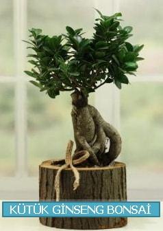Kütük ağaç içerisinde ginseng bonsai  Erzincan 14 şubat sevgililer günü çiçek