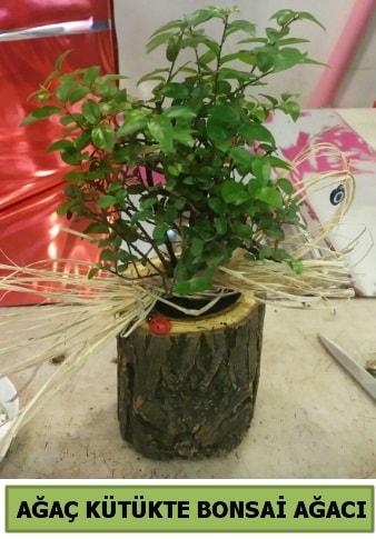 Doğal ağaç kütük içerisinde bonsai ağacı  Erzincan 14 şubat sevgililer günü çiçek