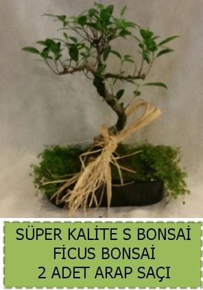 Ficus S Bonsai ve arap saçı  Erzincan çiçek online çiçek siparişi