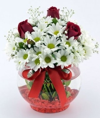 Fanusta 3 Gül ve Papatya  Erzincan çiçek yolla , çiçek gönder , çiçekçi