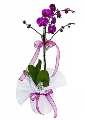 Tekli Mor Orkide  Erzincan anneler günü çiçek yolla