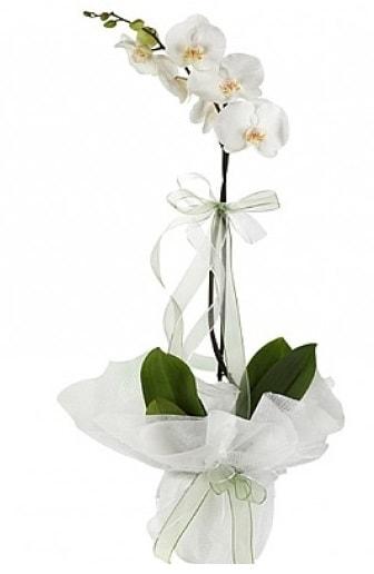 Tekli Beyaz Orkide  Erzincan güvenli kaliteli hızlı çiçek