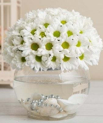 Fanusta beyaz Papatya  Erzincan çiçek servisi , çiçekçi adresleri