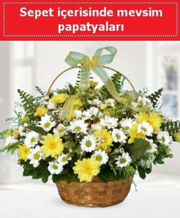 Sepet içerisinde mevsim papatyaları  Erzincan kaliteli taze ve ucuz çiçekler